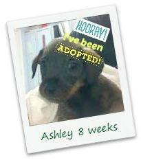 Ashley_adopt.jpg
