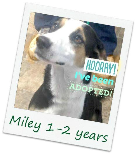 Miley_adopt.jpg