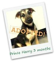 Harry_adopt.jpg