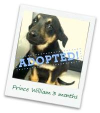 William_adopt.jpg
