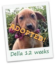 Della_adopt.jpg