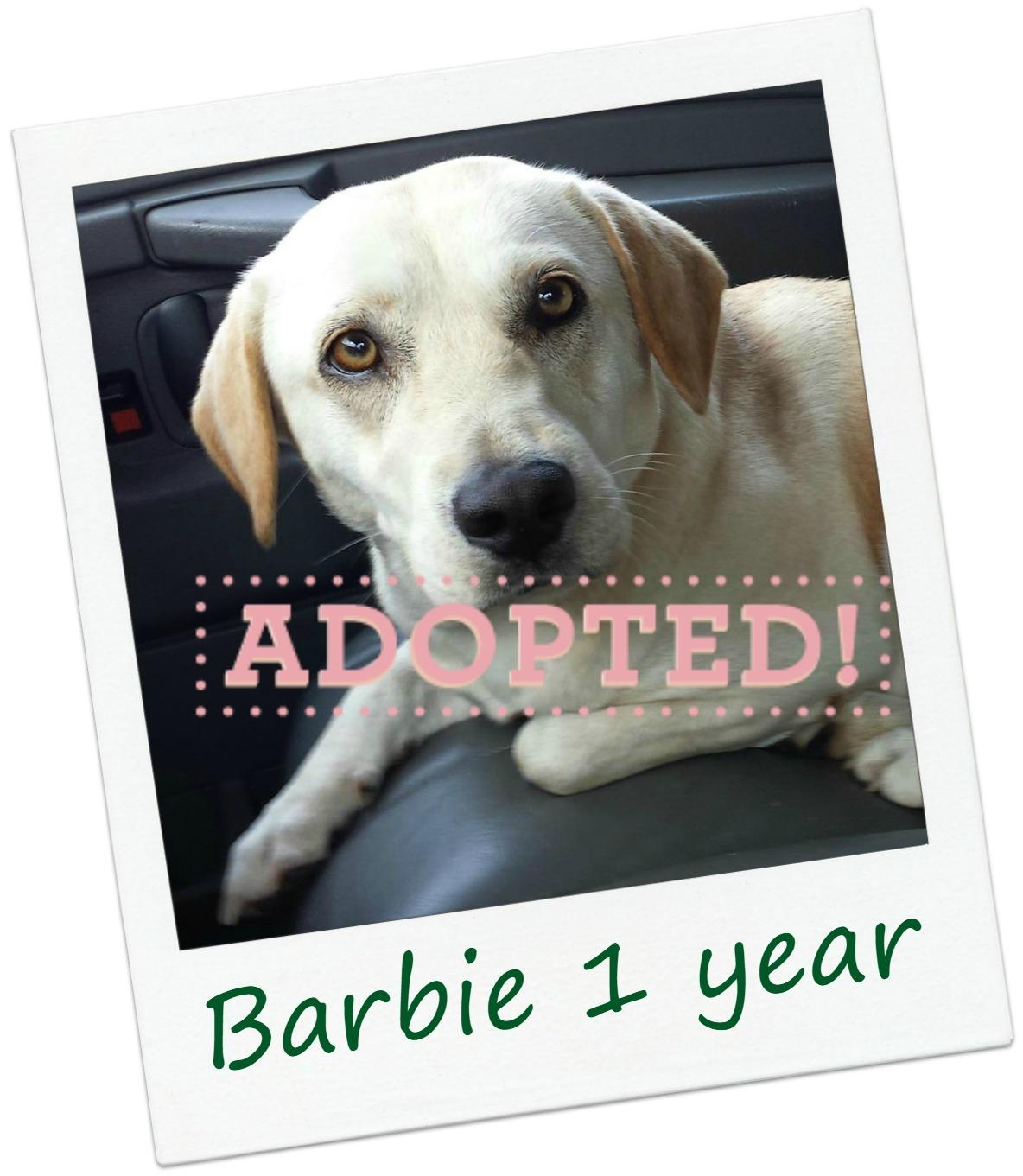 barbie_adopt.jpg