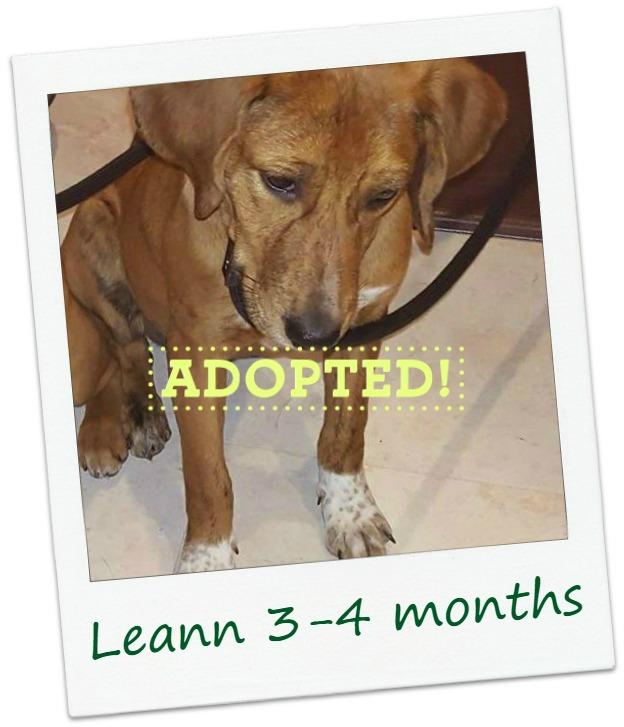 Leann_adopted.jpg