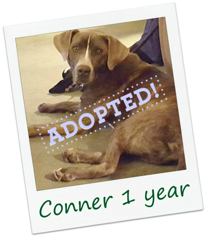 Conner_adopted.jpg