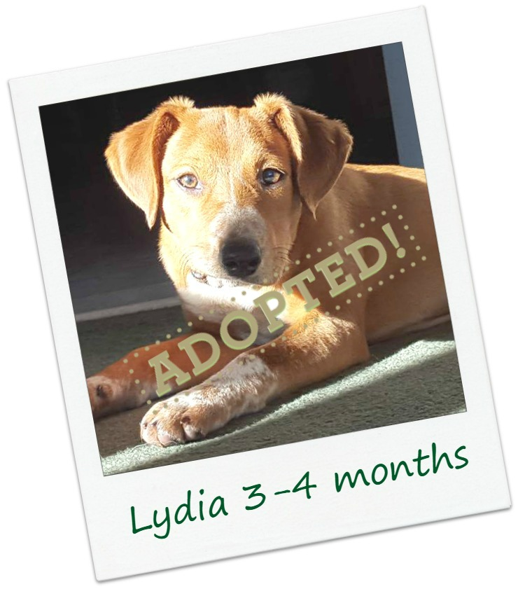 Lydia2_adopted.jpg