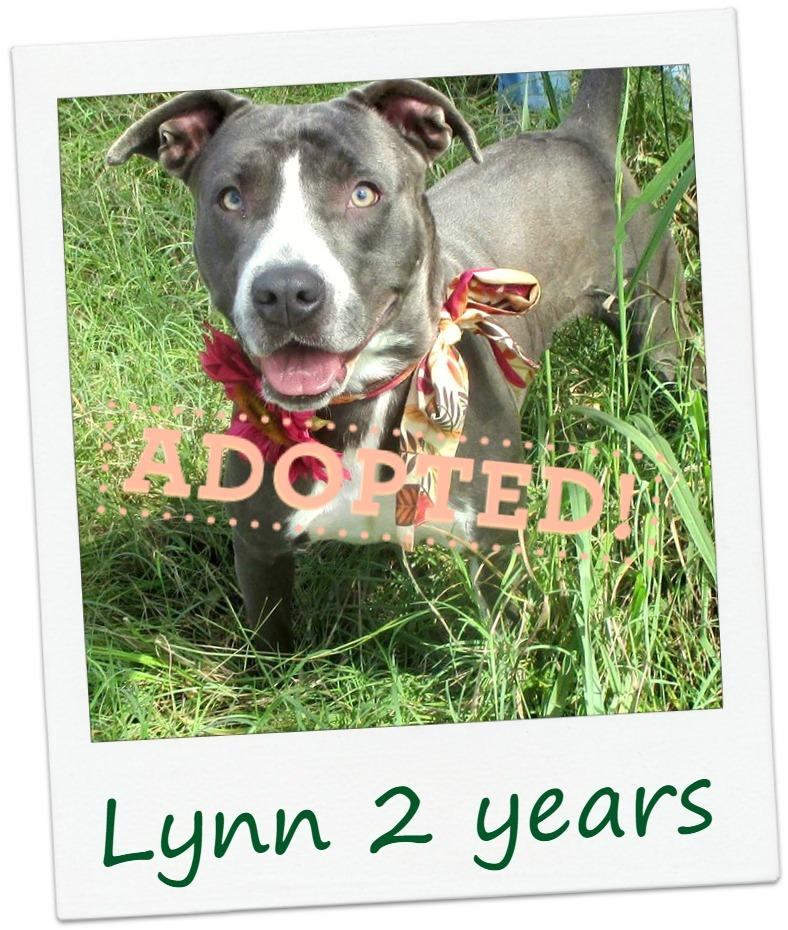 Lynn_adopted.jpg