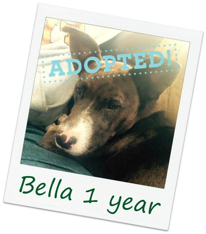Bella_adopted.jpg