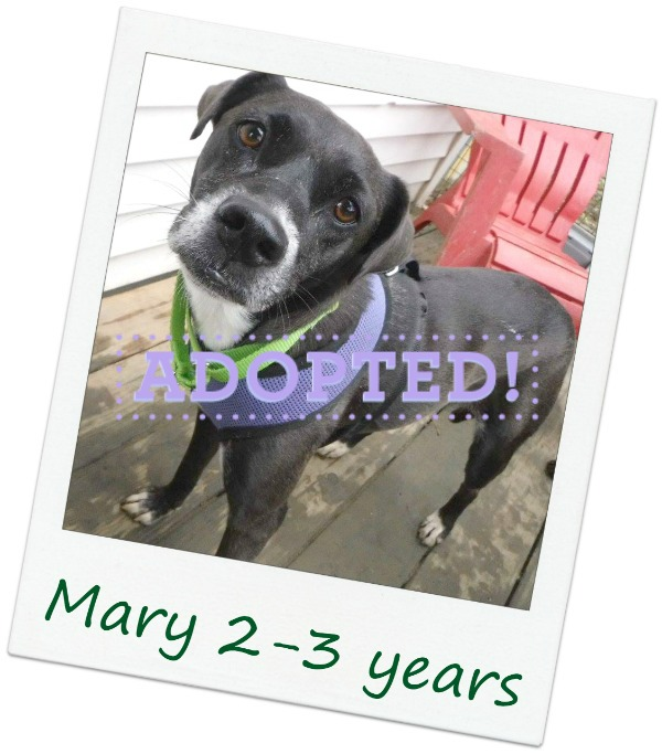 Mary_adopted.jpg