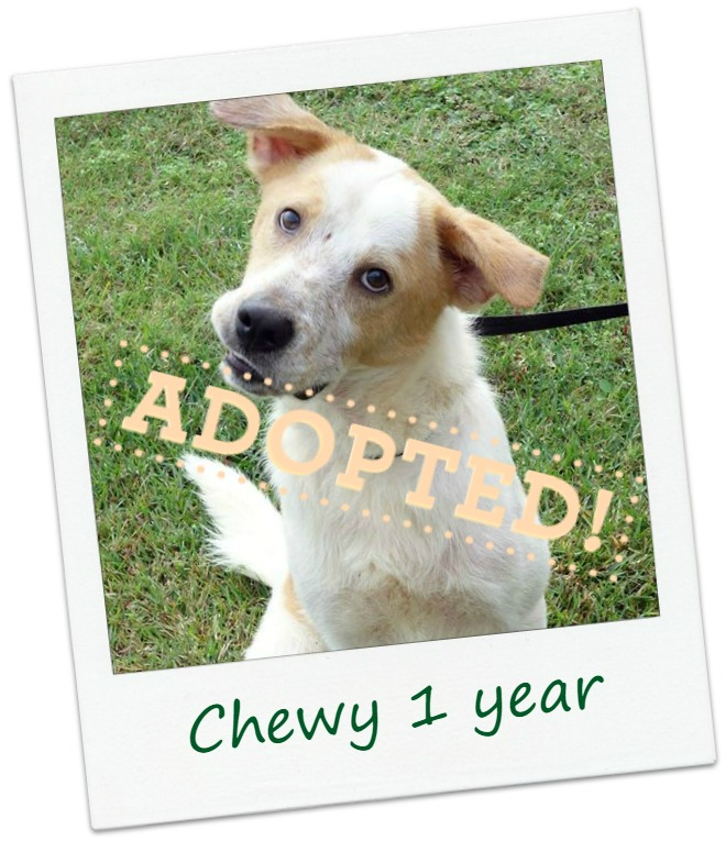 chewy_adopt.jpg
