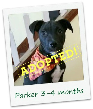 parker_adopt.jpg