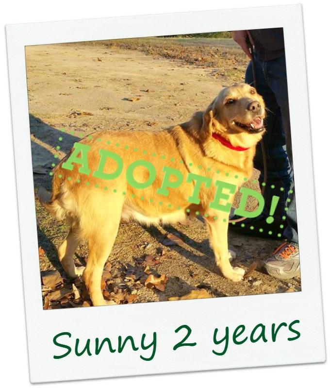 sunny_adopt.jpg