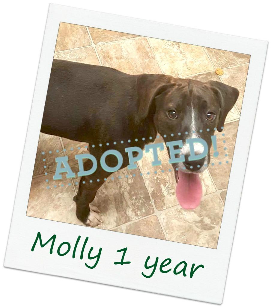 Molly_adopt.jpg