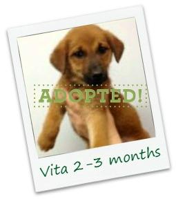 Vita_adopted.jpg