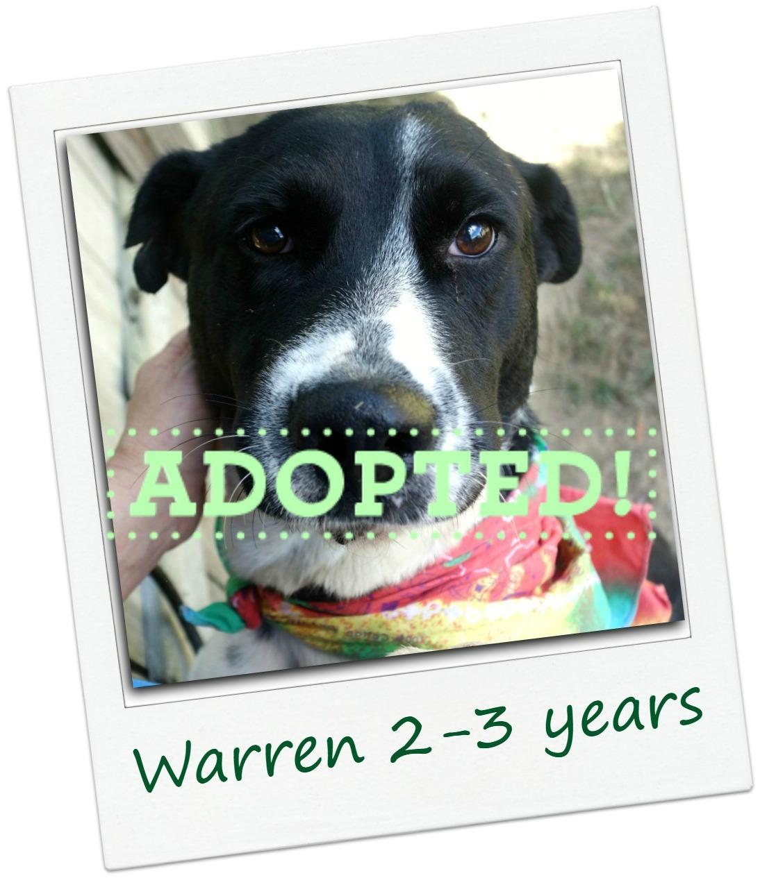 warren_adopted.jpg