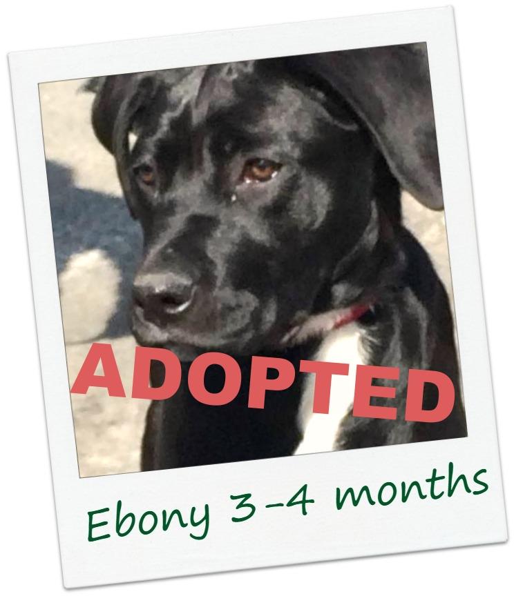Ebony_4Cover.jpg