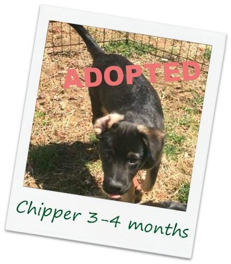 Chipper_Cover8.jpg