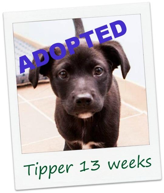 Tipper_cover.jpg