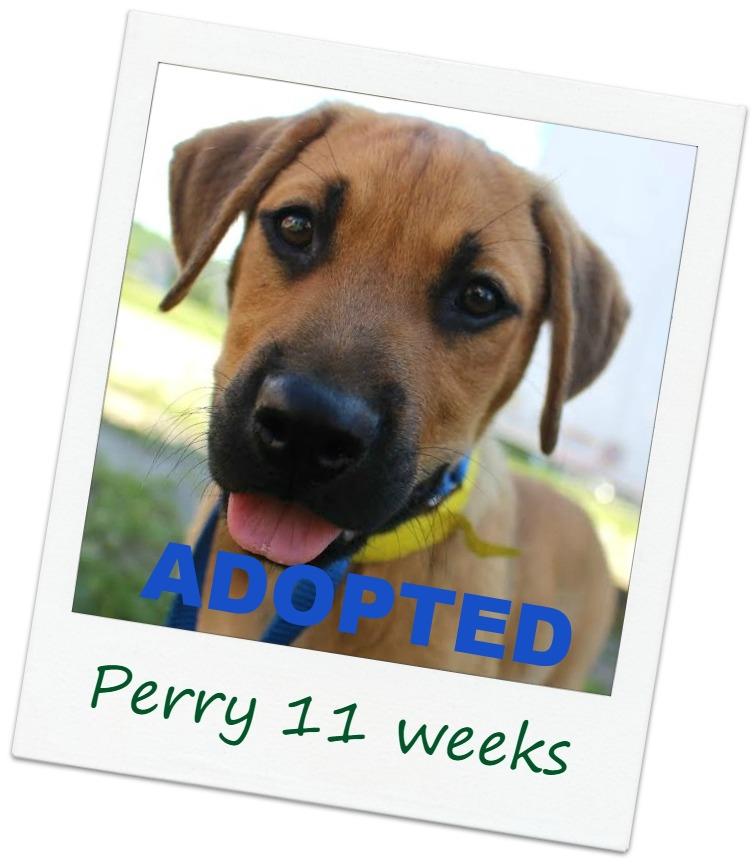 Perry1b_cover.jpg