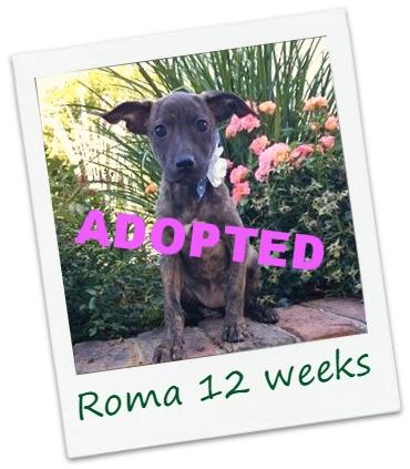 roma4_Cover.jpg