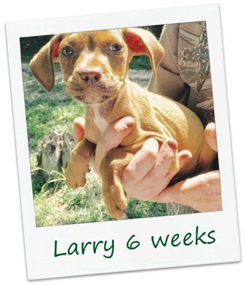 Larry_Cover.jpg