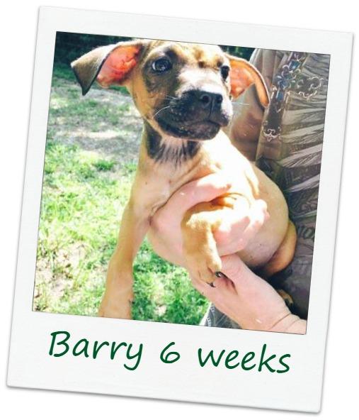 Barry_Cover.jpg