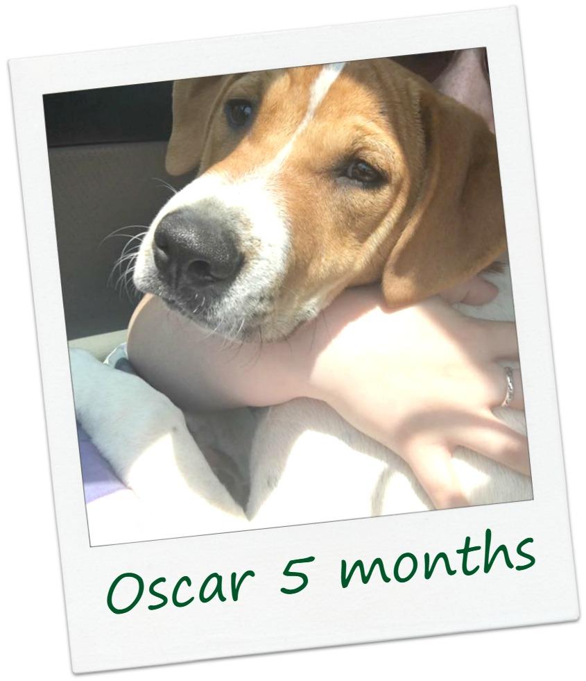 oscarF1_Cover.jpg