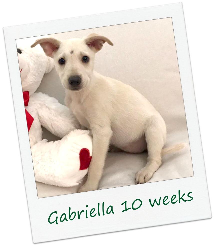 gabriella_Cover.jpg