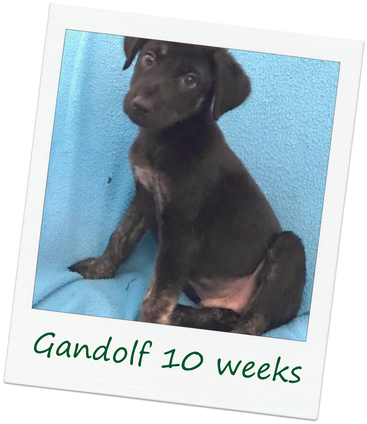 Gandolf_Cover.jpg