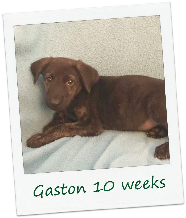 Gaston_Cover.jpg