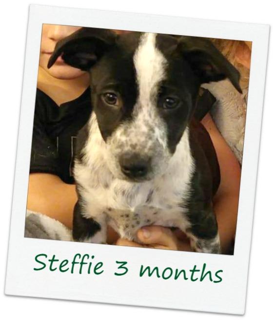 STeffie_Cover2.jpg