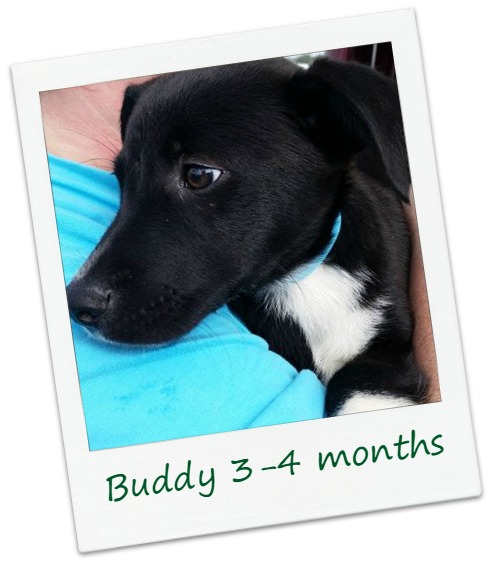 Buddy1_cover.jpg