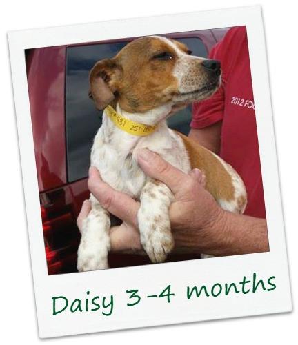 Daisy_COver.jpg