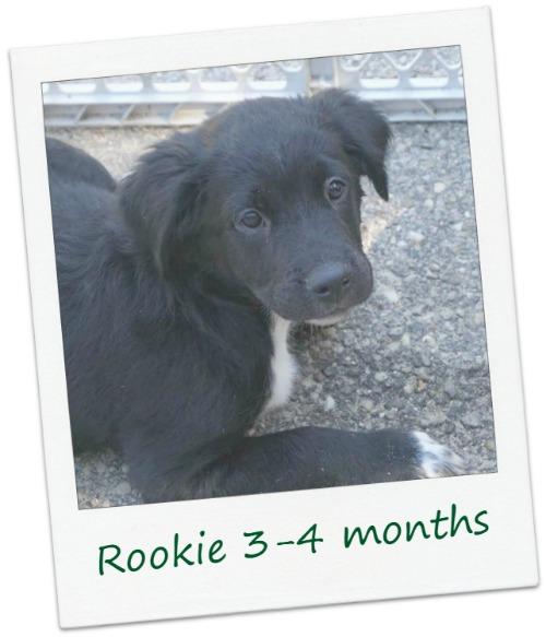 rookie22_Cover.jpg