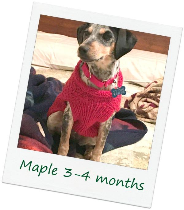 Maple8_Cover.jpg