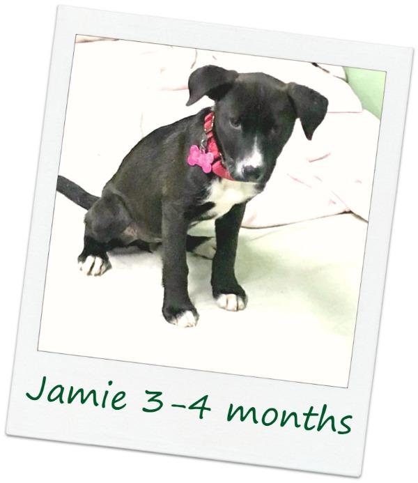 Jamie1_Cover.jpg