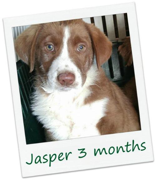 Jasper_Cover.jpg