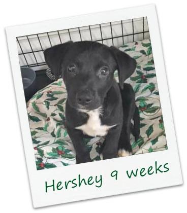 Hershey5_Cover.jpg