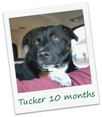 Tucker9_COver.jpg