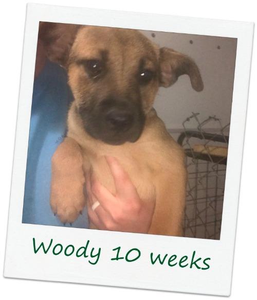 Woody_COver.jpg