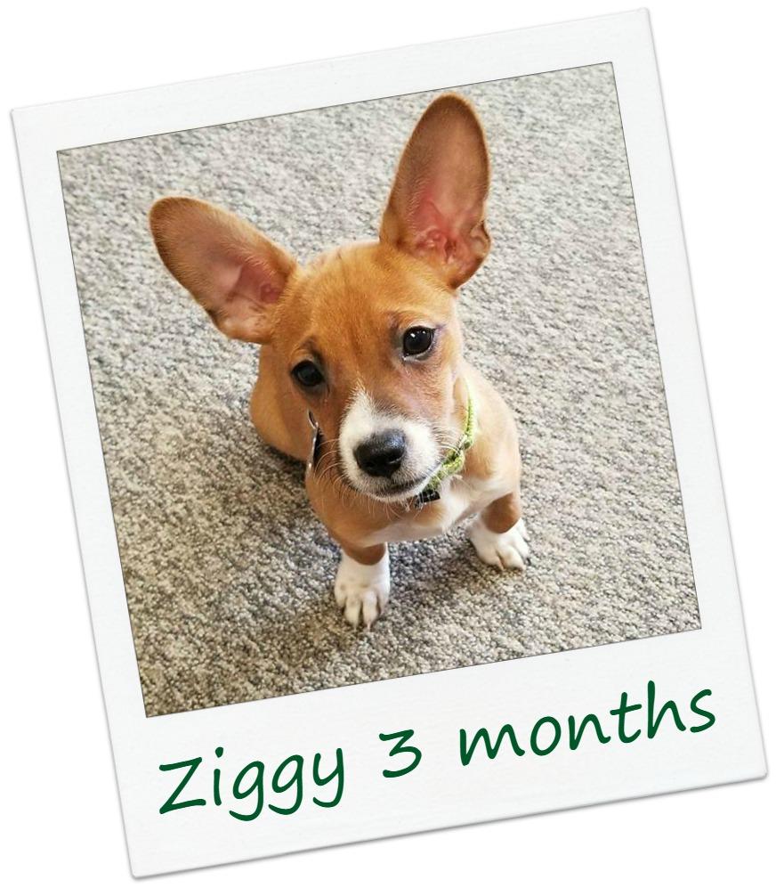 ziggy23Cover.jpg