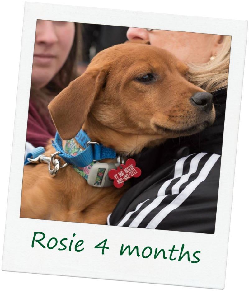 Rosie_Cover.jpg