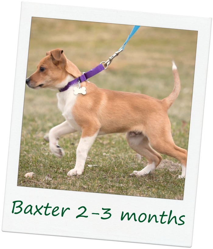 BaxterCover.jpg