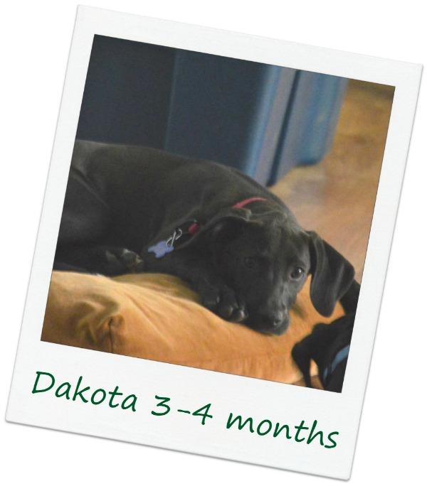 DakotaF4_Cover.jpg