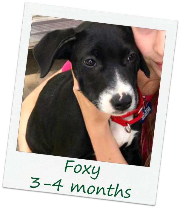 foxy_Cover4.jpg