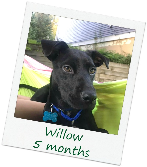 Willow3_Cover.jpg