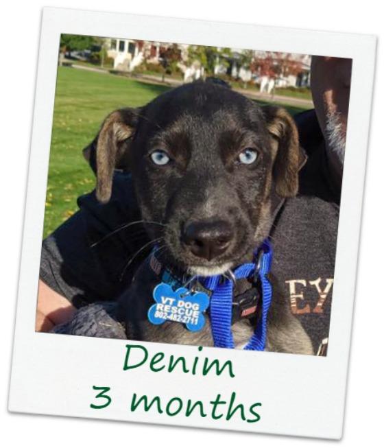 Denim4_Cover.jpg