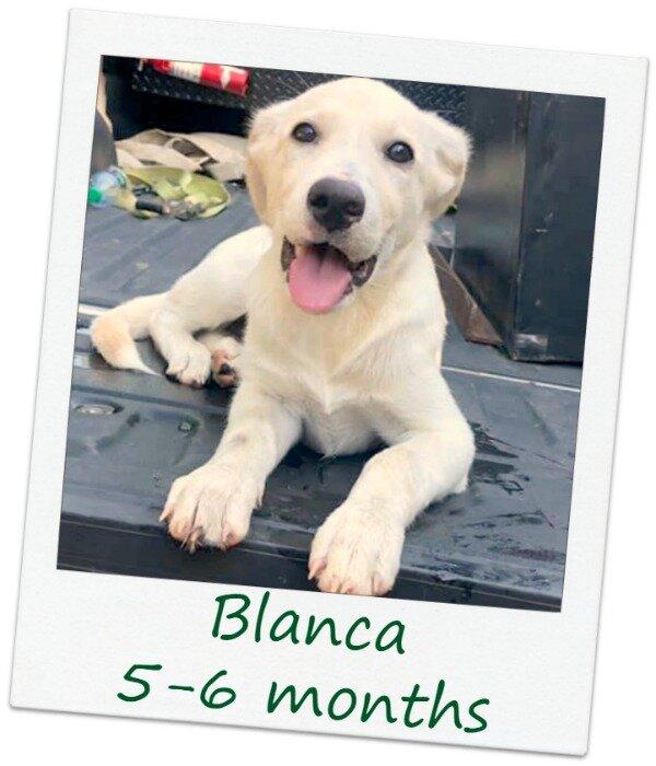 Blanca2_Cover.jpg
