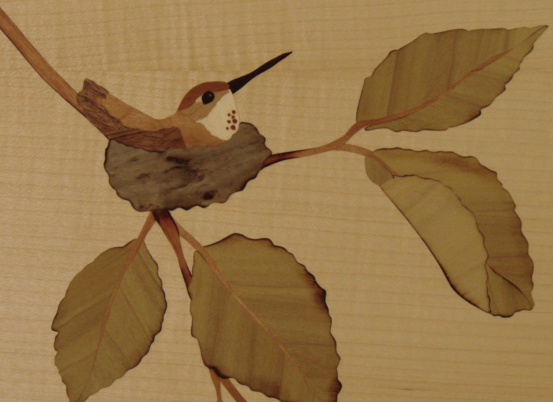 hummingbird in nest.jpg