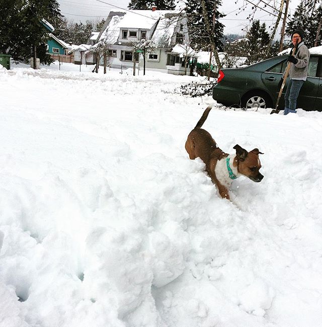 I have an obsession with snow! #snow #dogandsnow #snowdogsofinstagram #puppydog #cutedogs #dogsofinstagram