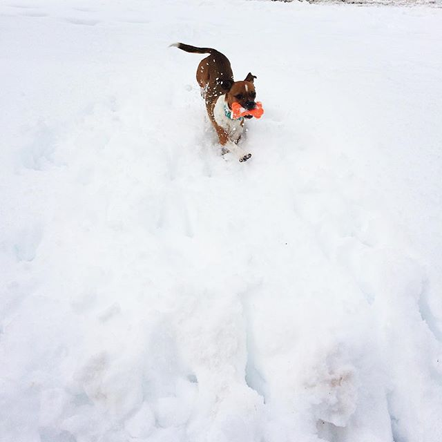 Snow time was enjoyed today!!! #snow#puppydog#snowday #dogsofinstagram #snowdogsofinstagram #cute #cutedog #snowstorm #snowstorm2019